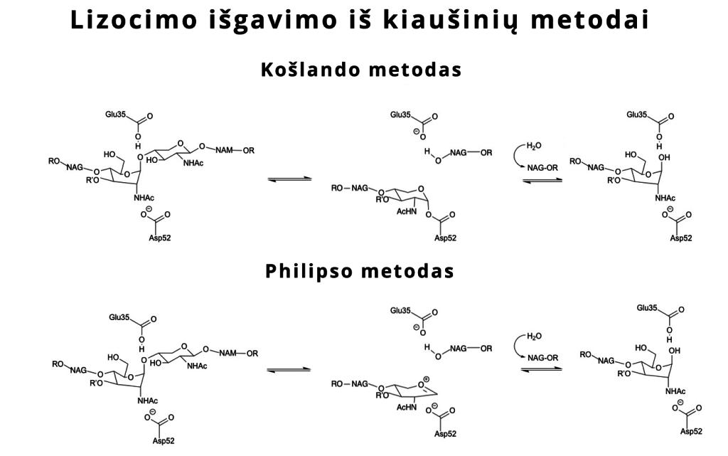 lizocimo išgavimo iš kiaušinių metodai